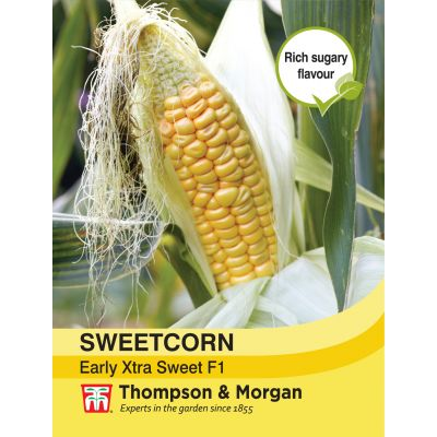 Sweetcorn Early Xtra Sweet F1 Hybrid - image 1